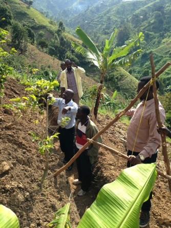 Aménagement d'une tranchée dans une plantation de bananes plantains à l'aide d'une structure en A pour respecter les courbes de niveaux