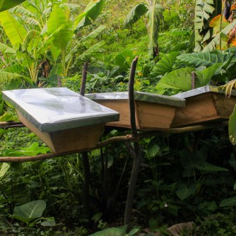 Ruches installées pour démarrer des activités d'apiculture